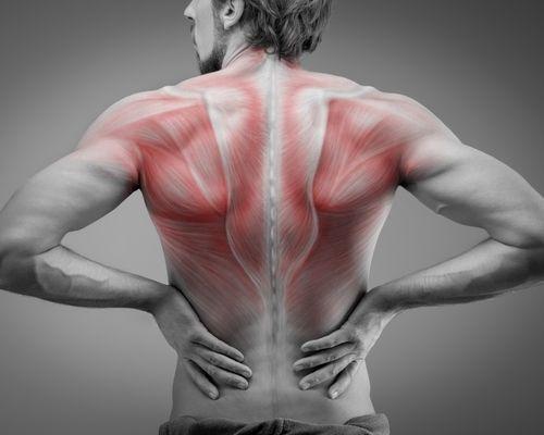 Reversus U - Seminare und Vorträge zum Thema Rücken